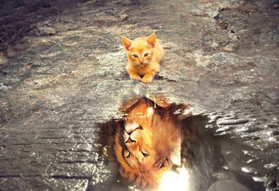 Un chaton observe son reflet dans une flaque d'eau : il y voit un lion. Idéal pour représenter un entrepreneur en début de parcours !