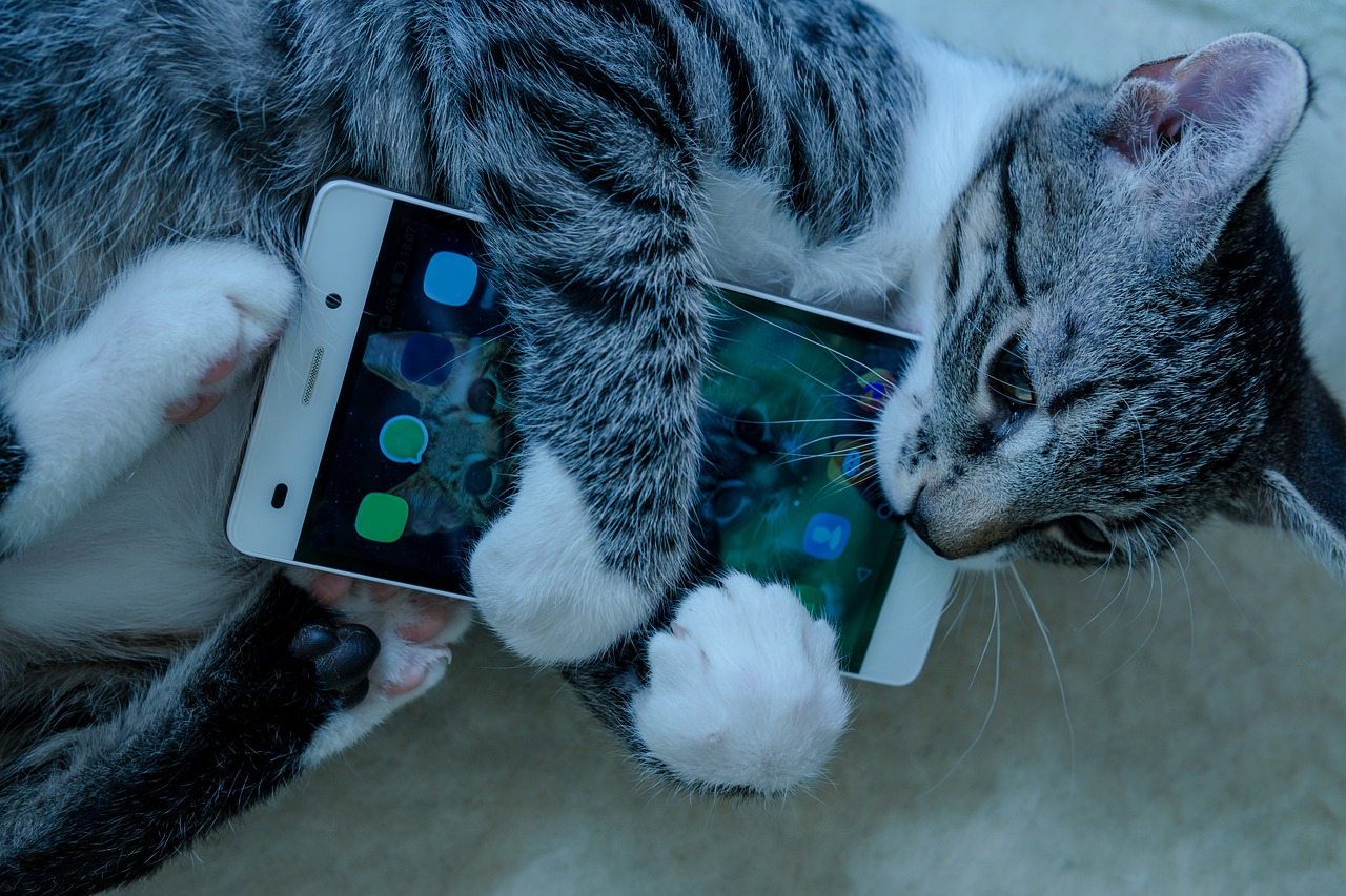 Un chat qui tient un smartphone
