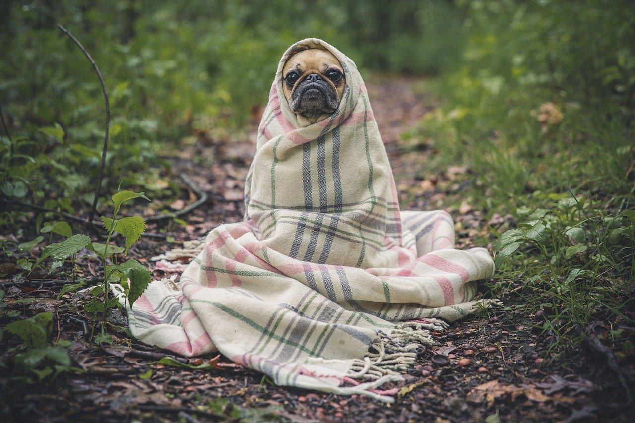 Un petit chien emmitouflé dans une couverture. La rapport avec une action de sensibilisation ? Aucun.