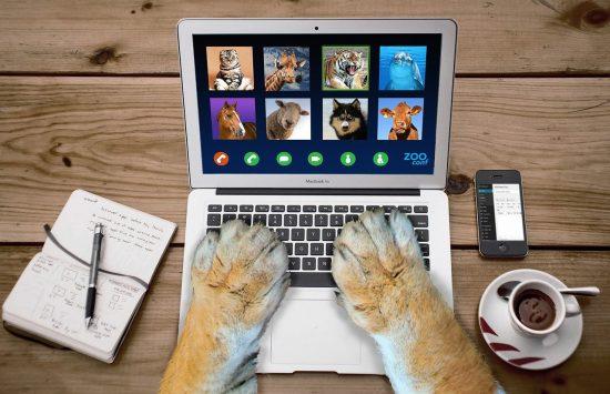 Un groupe d'animaux font une visioconférence - une illustration de la cohésion d'équipe, même en télétravail !